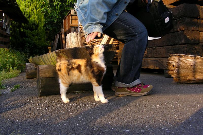 ベンチで遊ぶ三毛猫1