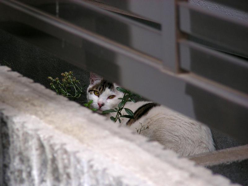 フェンスの隙間の猫1