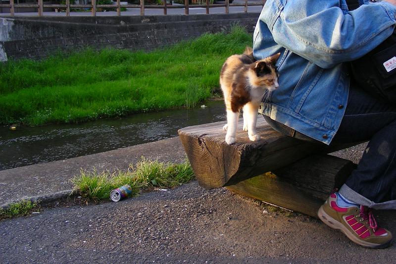 ベンチで遊ぶ三毛猫2