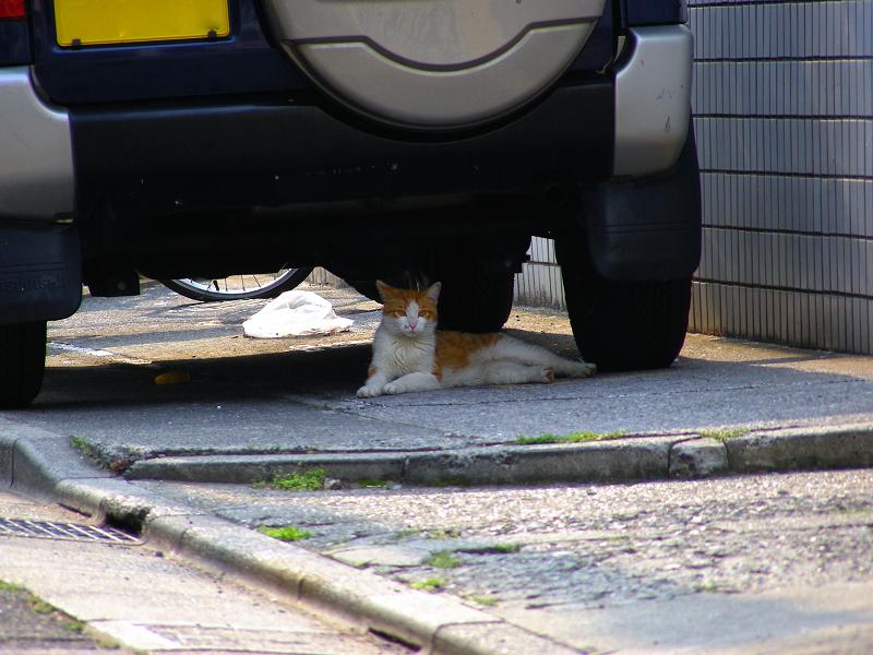 民家駐車場と茶白猫2
