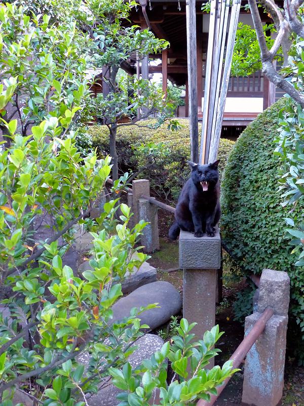 黒猫と卒塔婆1