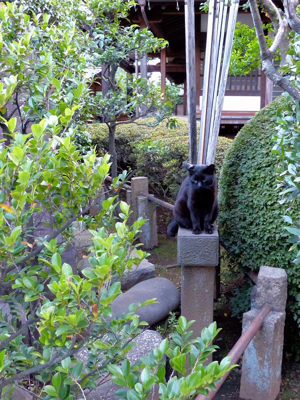 黒猫と卒塔婆2