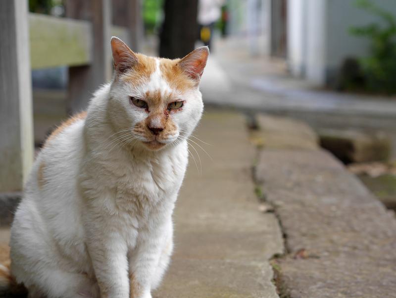 犬走りから見ている白茶猫2