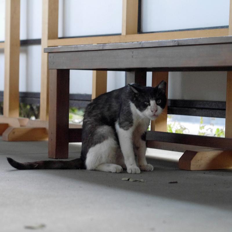 ベンチと黒白猫2