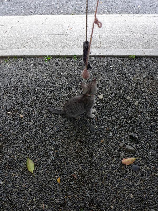紐で遊ぶ仔猫1