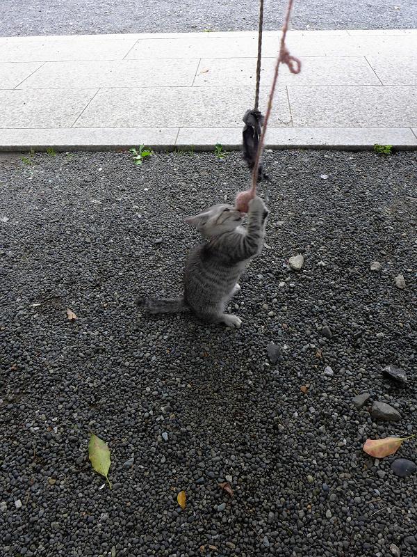 紐で遊ぶ仔猫2