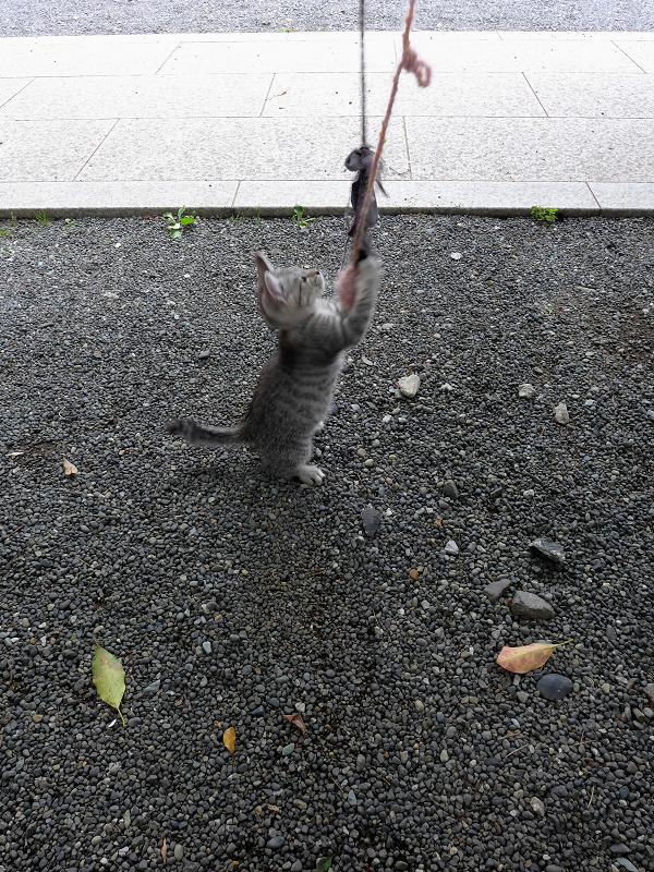 紐で遊ぶ仔猫3