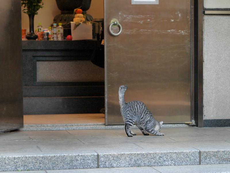お堂から出て来たサバトラ猫3