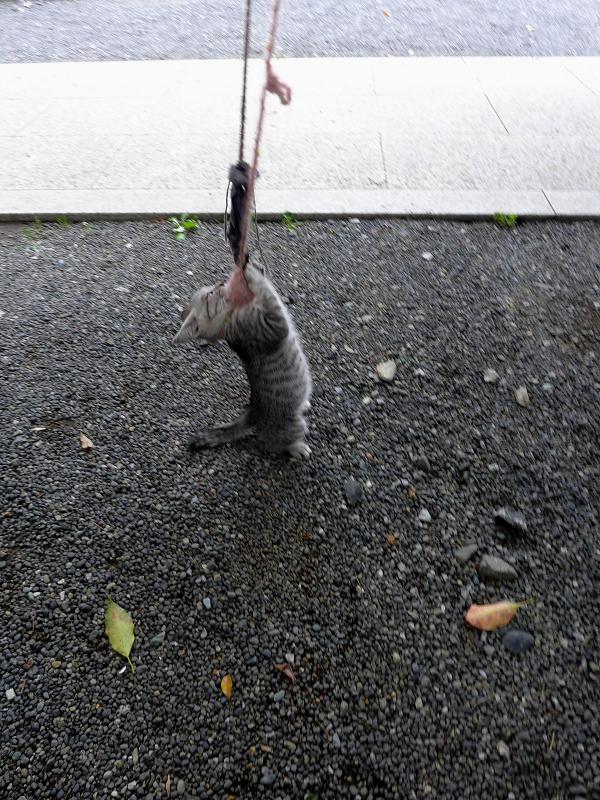 紐で遊ぶ仔猫4