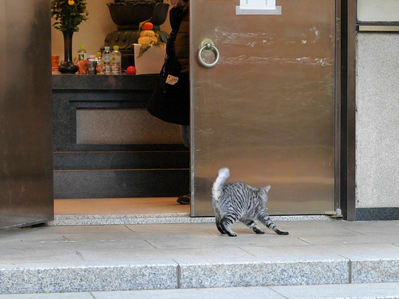 お堂から出て来たサバトラ猫4