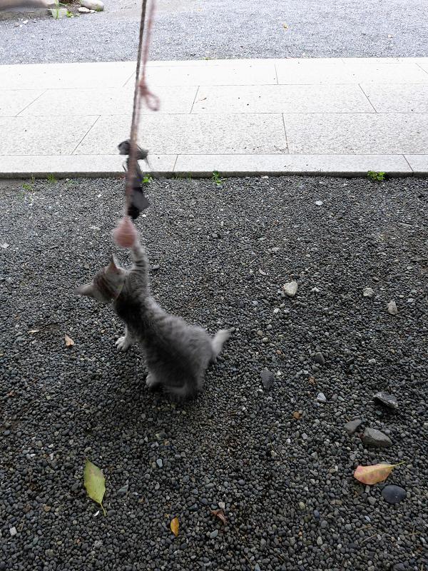 紐で遊ぶ仔猫5