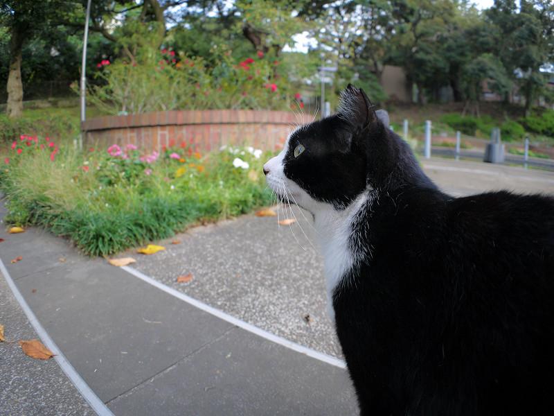 接近した黒白猫