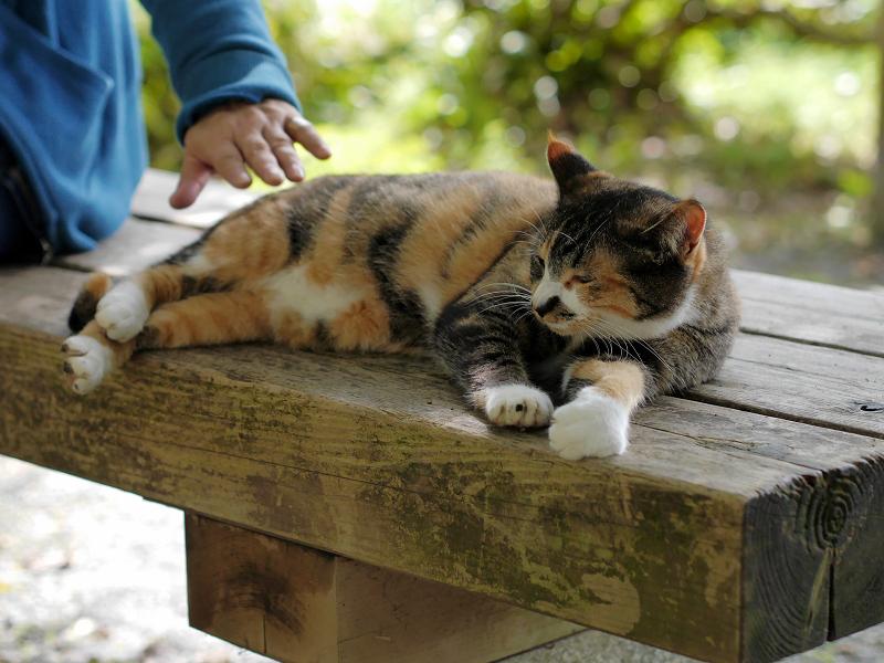 ベンチで寝る三毛猫1