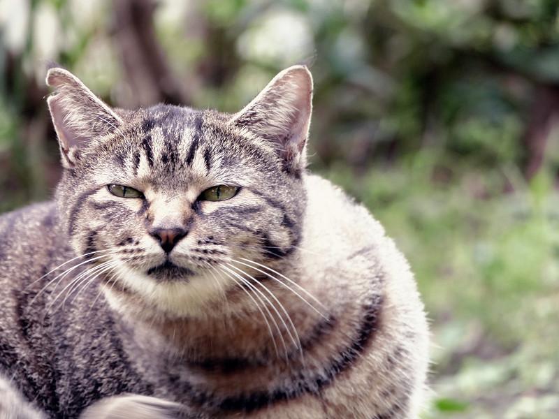 モードダイヤルがずれてたキジトラ猫1