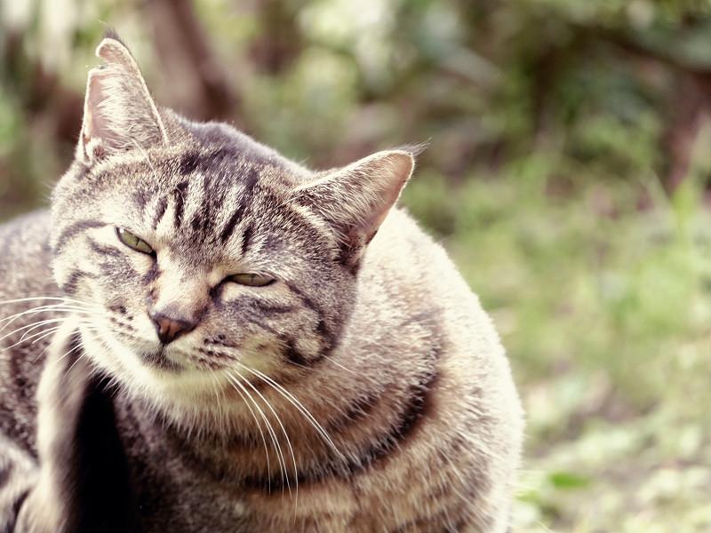 モードダイヤルがずれてたキジトラ猫2