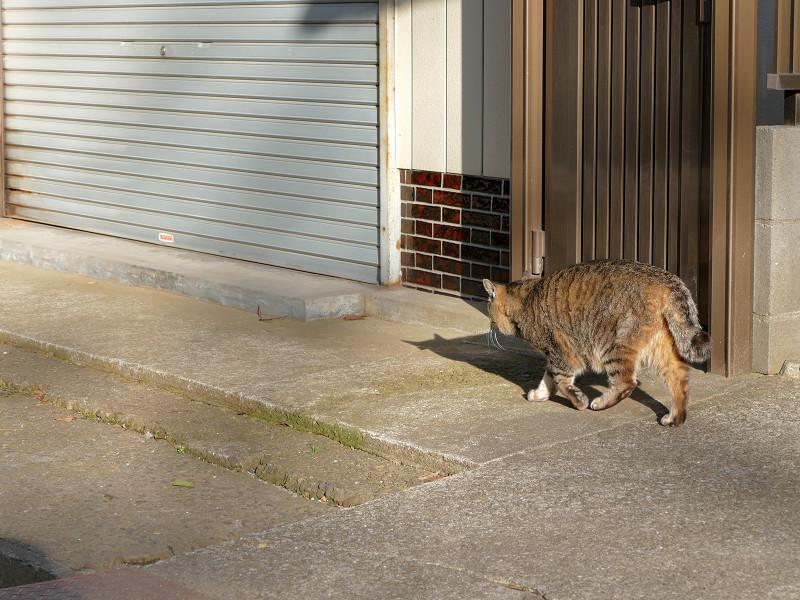 参道の端を歩くキジトラ猫2