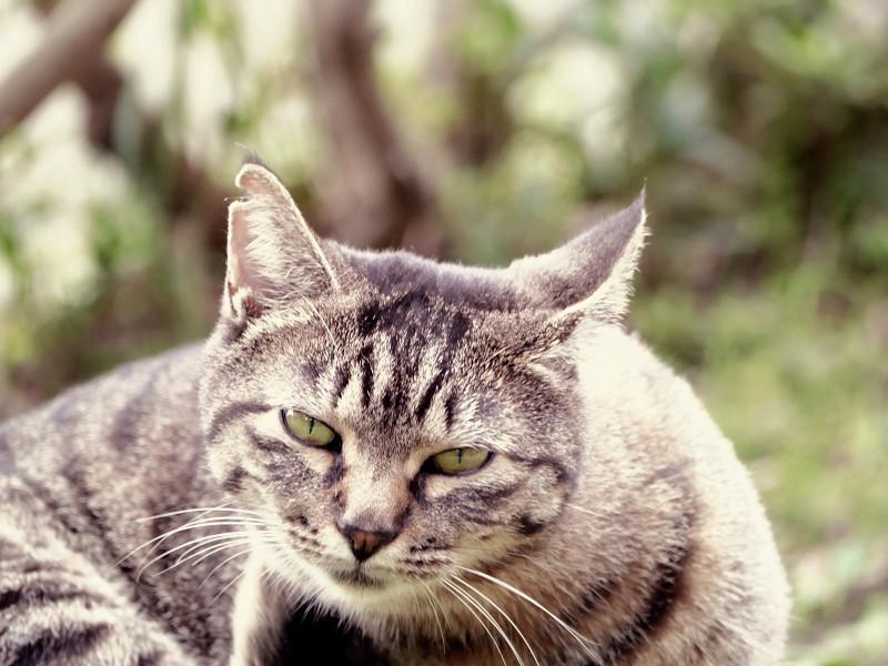 モードダイヤルがずれてたキジトラ猫3