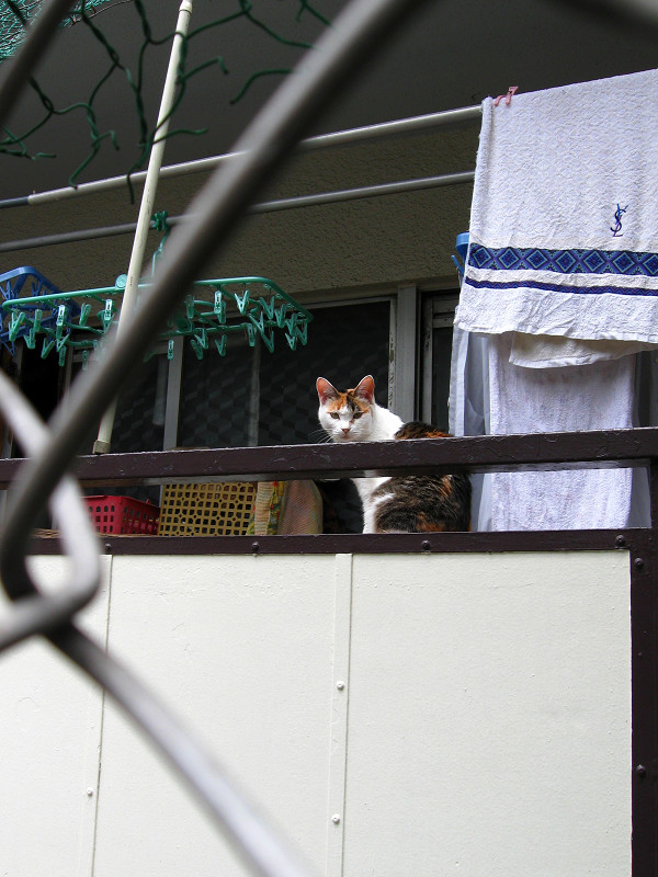 物干し場の三毛猫