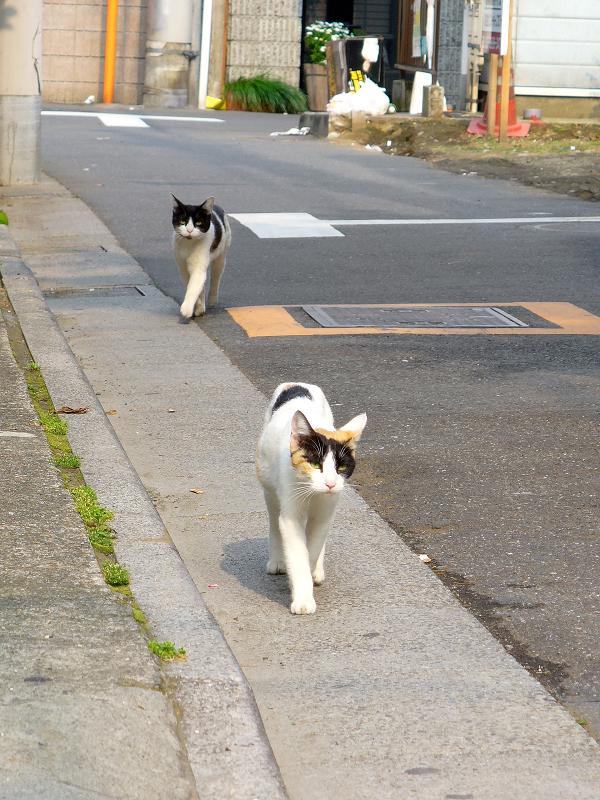 歩き寄る猫たち1