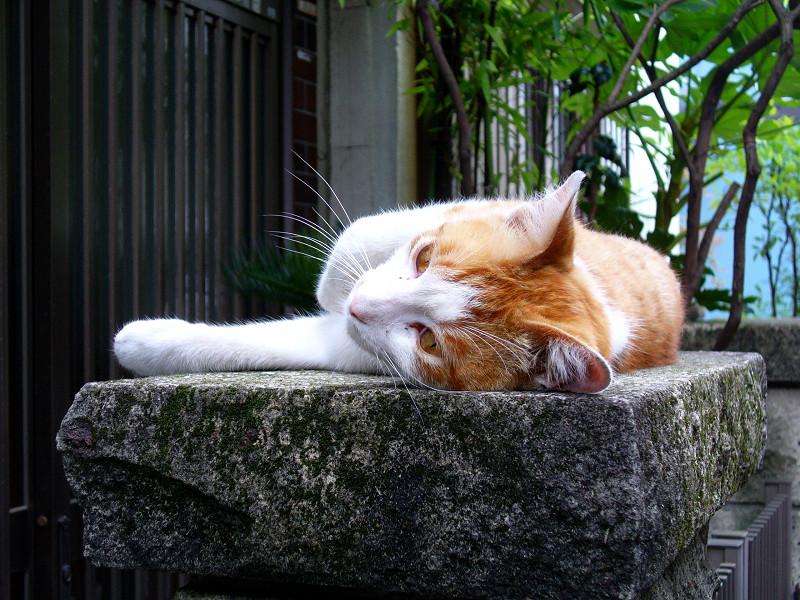 門柱で寛ぐ茶白猫1