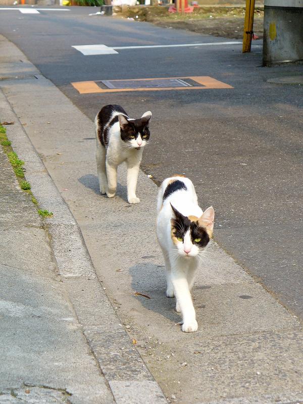 歩き寄る猫たち2