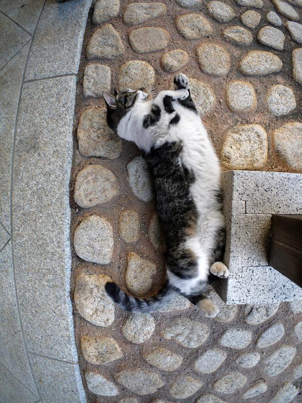 柱とタイルとキジ白猫1