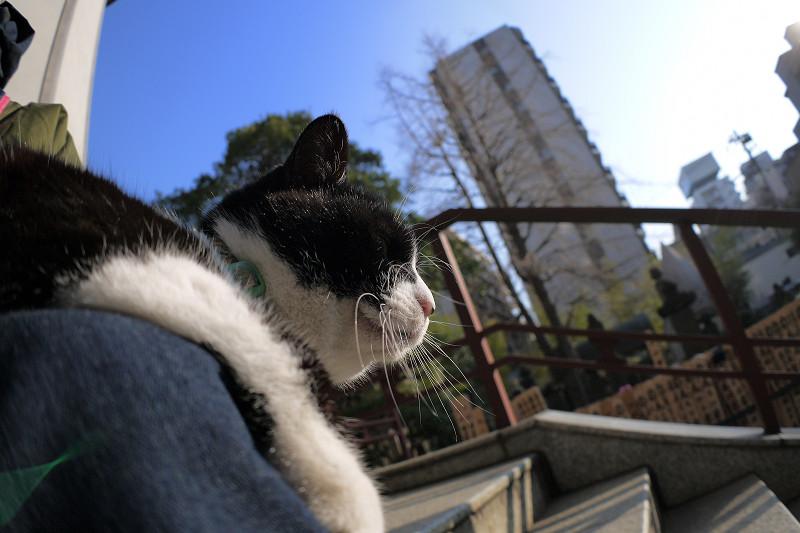 冬青空と黒白猫1