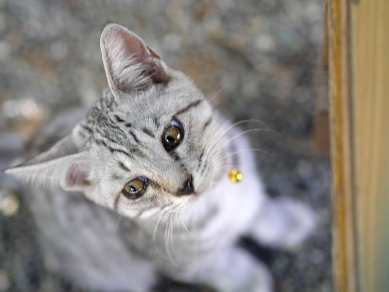 下から見上げるサバトラ仔猫2