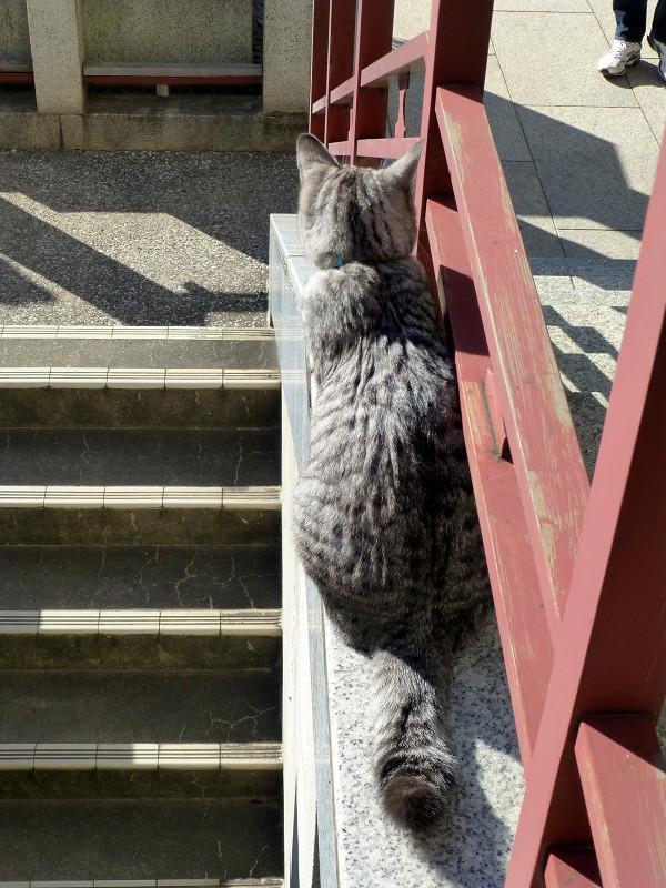 朱色柵とサバトラ猫1