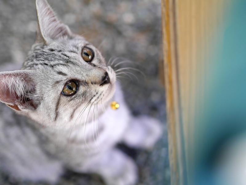 下から見上げるサバトラ仔猫3