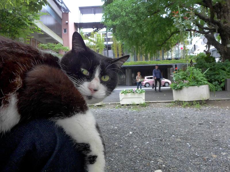膝に乗って仔猫を見ている黒白猫3