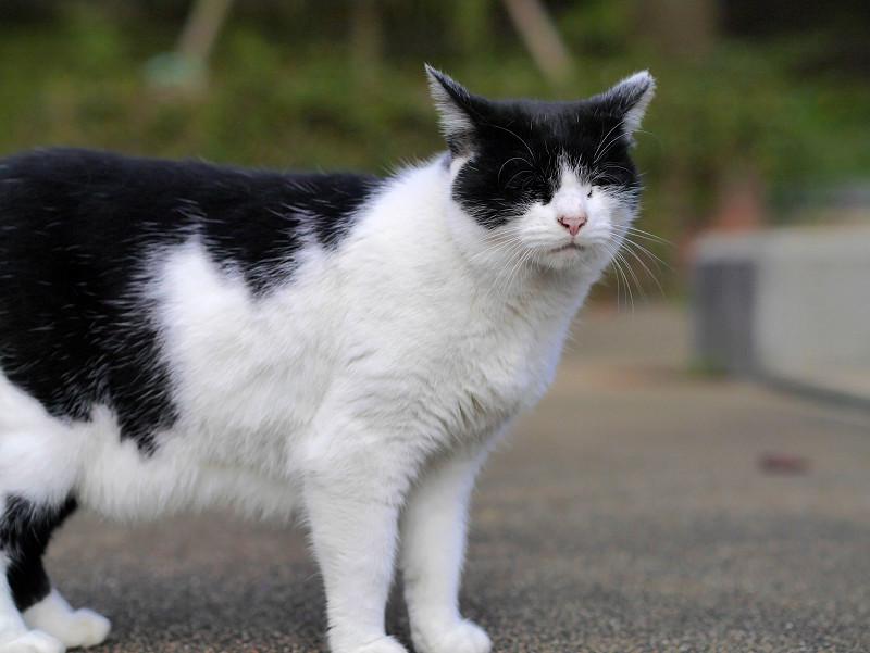 視線が合った白黒猫2