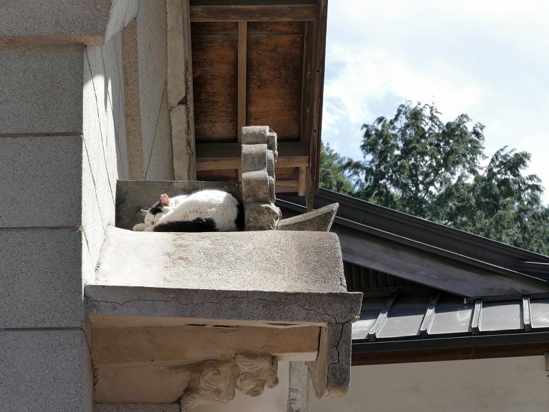 蔵の上で寝ている白黒猫2