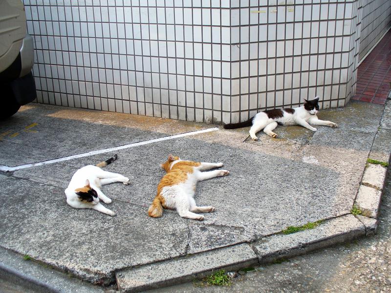 角っこ駐車場の猫たち1