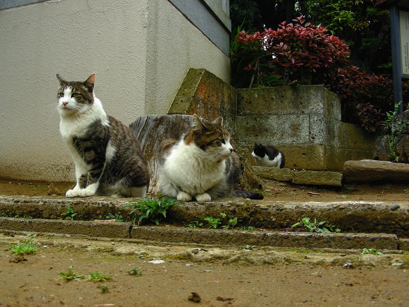 参道でマッタリの猫たち1