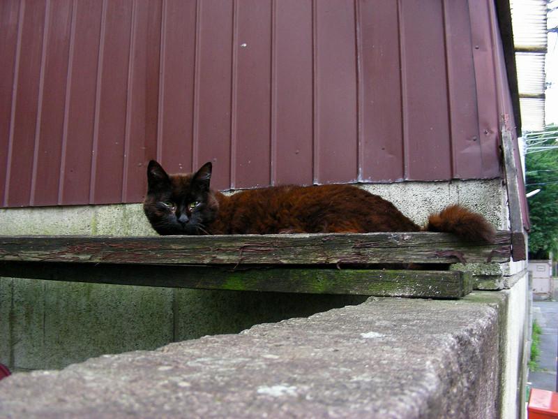 小屋の横にいる黒猫1