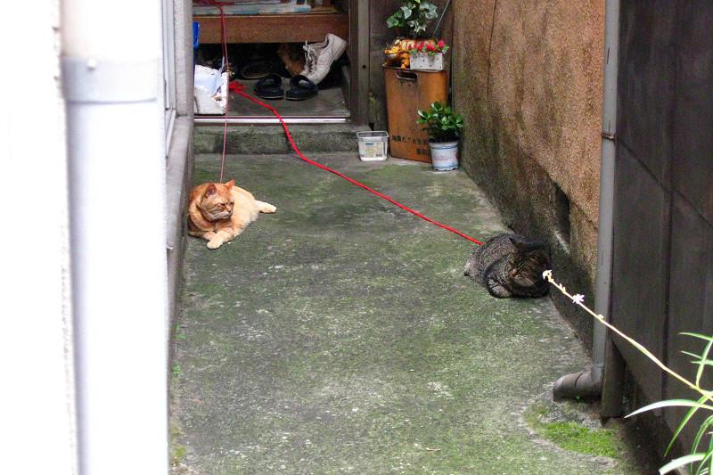 奥まった玄関先の猫2匹