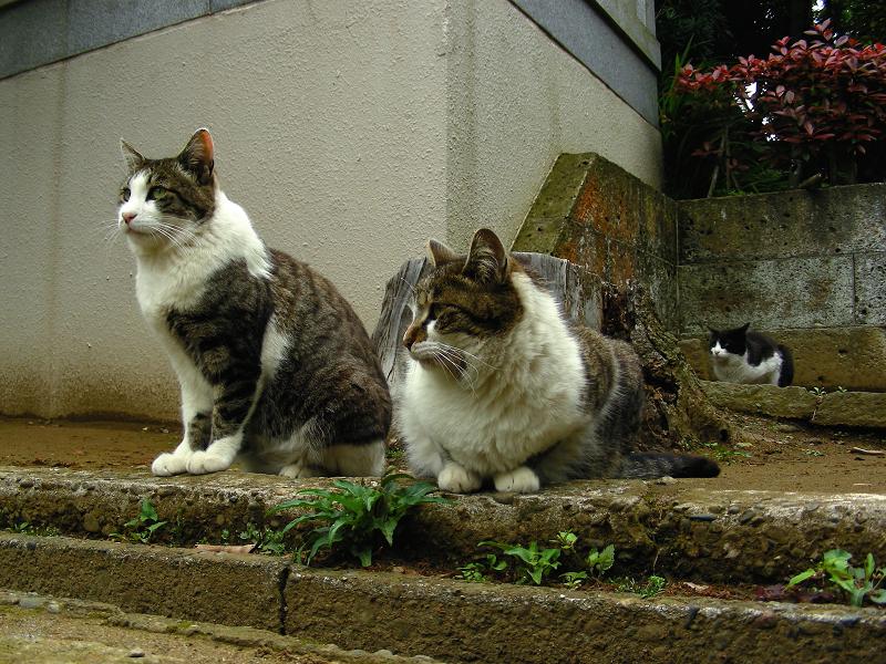 参道でマッタリの猫たち2