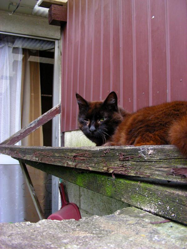 小屋の横にいる黒猫2
