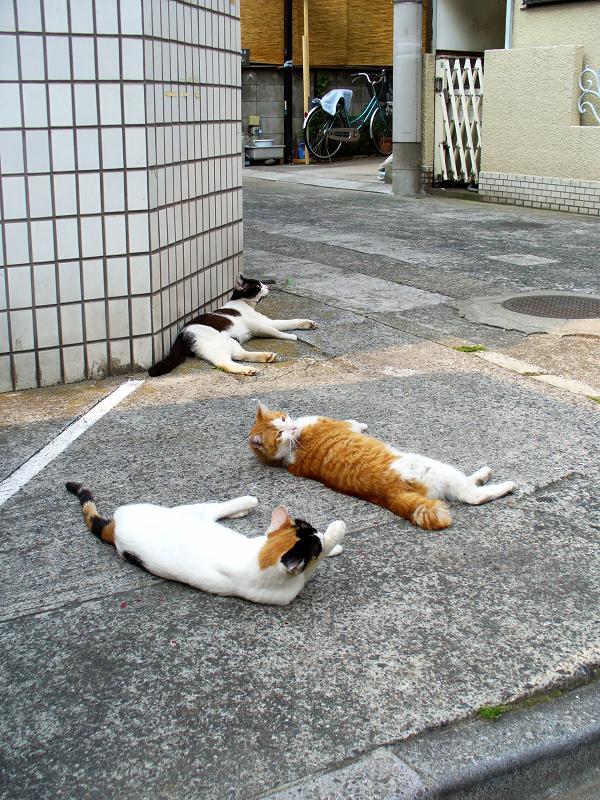 角っこ駐車場の猫たち2
