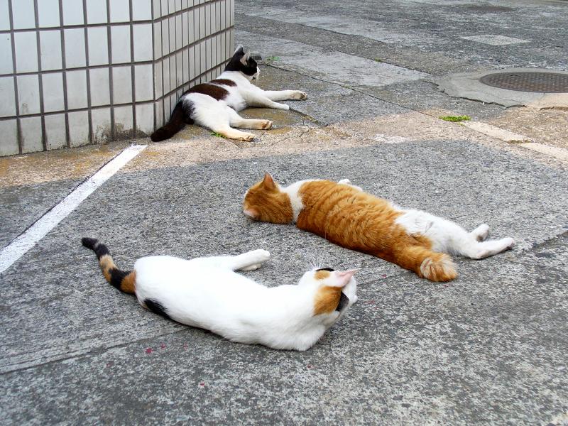 角っこ駐車場の猫たち3