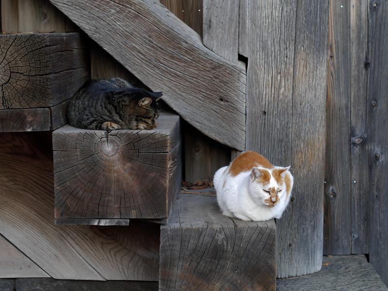 階段の端に座った2匹