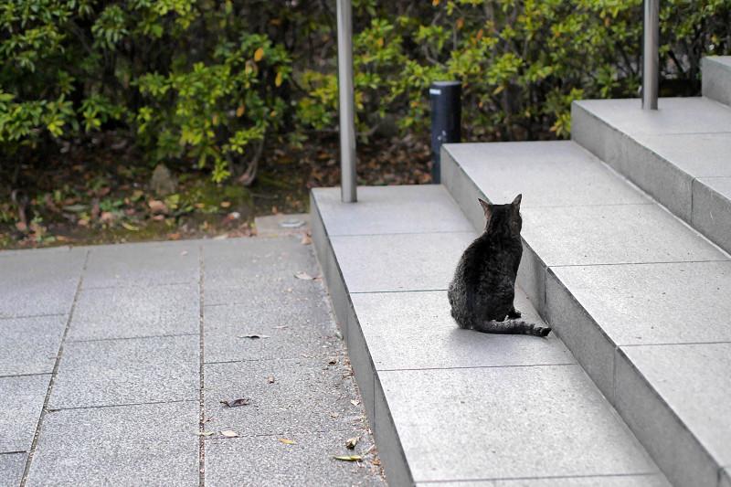 階段に座ってるキジトラ猫1