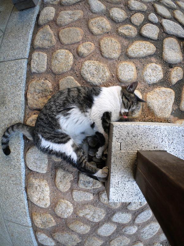 石タイルとキジ白猫3