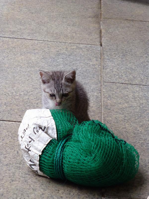 ゴミネットで遊ぶ仔猫1