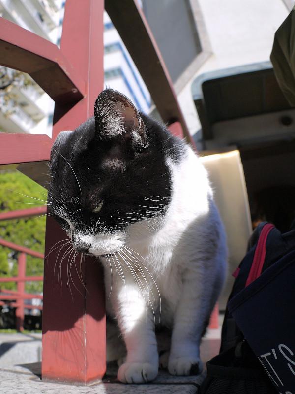 階段の手すりにいる白黒猫2