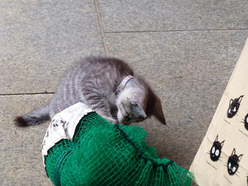 ゴミネットで遊ぶ仔猫2