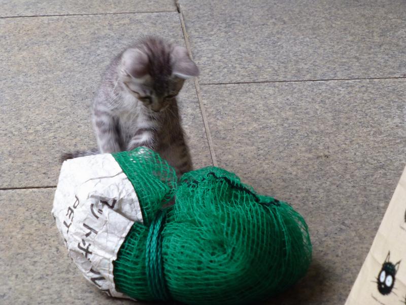 ゴミネットで遊ぶ仔猫3