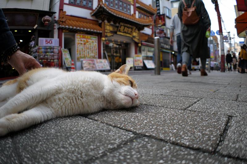 飲食街の茶白猫1