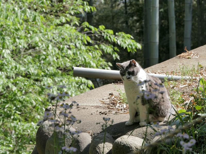 崖下を睨んでる猫1